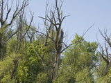 Trees Suffering from Drought in Northern Colorado Photographic Print by Jon Van de Grift