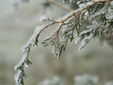 Freezing Rain Coats a Tree in a Layer of Ice in Early Spring in Colorado Fotografie-Druck von Jon Van de Grift
