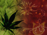 Medicinal Marijuana Photographic Print by Carol & Mike Werner