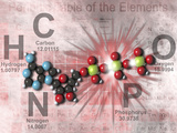 Adenosine Triphosphate Molecular Model Showing High Energy Bonds with a Periodic Table of Elements Photographic Print by Carol & Mike Werner
