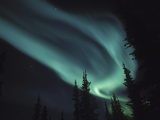 Aurora Borealis, Alaska, USA Photographic Print by Tom Walker