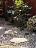 Small, Fenced Japanese Garden with Japanese Aralia (Fatsijaponica) Japanese Andromeda Photographic Print by Phillip Smith