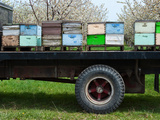 Bee Hives on a Flat Bed Truck Parked Near a Cherry Orchard in the Spring Photographic Print by Jeffrey Wickett