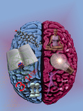 Illustration Showing the Attributes of Left and Right Brain Activity in Humans Photographic Print by Carol & Mike Werner