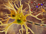 Illustration of P7C3 and Alzheimer's Disease Photographic Print by Carol & Mike Werner
