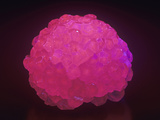 Calcite Photographed under Short-Wave Ultraviolet (Uv) Light and Fluorescing Photographic Print by Mark Schneider