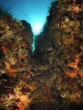 Underwater Mediterranean Sea Seascape with Abundant Invertebrate Life on Coral Reef, San Pietro Photographic Print by Solvin Zankl