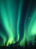 Aurora Borealis or Northern Lights, Alaska, USA Fotografie-Druck von Tom Walker