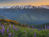 Early Summer Storm Clears the View of the Olympic Mountains, with Lupine Wildflowers Photographic Print by Geoffrey Schmid