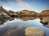 Oasis in Joshua Tree National Park, California, USA Photographic Print by Patrick Smith