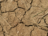 Mud Cracks in Soil During a Drought, Colorado, USA Photographic Print by Jon Van de Grift