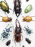 Beetle Collection Photographic Print by Alex Wild