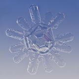 Snowflake, LM Photographic Print by Solvin Zankl