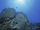 Star Coral (Montastrea), Bonaire, Caribbean Photographic Print by David Wrobel