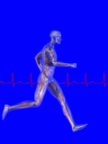 Runner, Male Likeness Showing Musculature and Skeleton Against an Ekg Photographic Print by Carol & Mike Werner