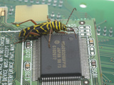 Locust Borer, Megacyllene Robiniae, on a Printed Circuit Board Next to an Integrated Circuit Photographie par B. Mete Uz