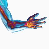 Carol & Mike Werner - Human Elbow Showing Bones and Muscles - Fotografik Baskı