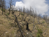 Thunderstorms Develop over a Burned Forest on a Steep Mountainside in Western Colorado Fotografie-Druck von Jon Van de Grift