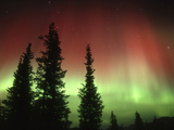 Aurora Borealis or Northern Lights, Alaska Range, Alaska, USA Photographic Print by Tom Walker