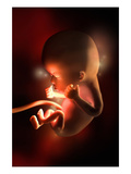 Illustration of Week 12 in Fetal Development Giclee Print by  Nucleus Medical Art