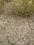 Dry Soil and Grassland Vegetation During a Drought in Northern Colorado Photographic Print by Jon Van de Grift