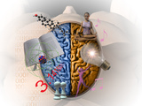 Illustration Showing the Attributes of Left and Right Brain Activity in Humans Lámina fotográfica por Carol & Mike Werner