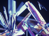 Polarized View of Fluocinonide Crystals, LM X50 Photographic Print by Arthur Siegelman