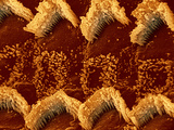 Hair Cells in a Mammal Cochlea, the Portion of the Inner Ear That Is Responsible for Hearing Photographic Print by  Kessel &amp; Shih