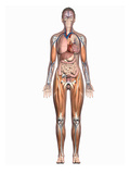 Biomedical Illustration Showing the Internal Organs of a Female in an Anterior View Giclee Print by  Nucleus Medical Art
