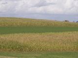 Corn Fields, Strip Farming, Iowa Photographic Print by  Scientifica