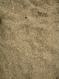 Sand on Sand Beach, Acadia National Park, Maine Photographic Print by  Scientifica