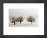 Snow Trees, New York Art by  Dickens