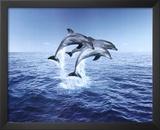 Dolphin Trio Prints