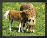 Two Ponies (Horses In Field) Art Poster Print Prints