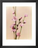 Peach Blossom Prints by Natalie Lane
