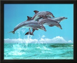 Steve Bloom (Four Dolphins) Art Poster Print Posters