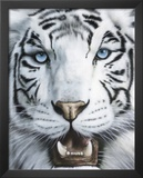 White Tiger (Tigre Blanco) Art Poster Print Art