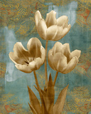 Tulip II Prints by Tania Bello