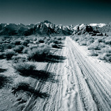 Lone Pine V Prints by Chris Simpson