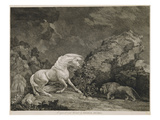 A Horse Affrighted by a Lion, Engraved by the Artist (Etching) Giclée-Druck von George Stubbs