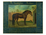 The Godolphin Arabian Giclee Print by D. Quigley
