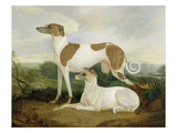 Two Greyhounds in a Landscape Giclee Print by Charles Hancock
