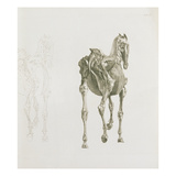Tab. Xv, from 'The Anatomy of the Horse...', 1766 (Engraving) Giclee Print by George Stubbs