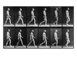 Man Walking, from 'Animal Locomotion', 1887 (B/W Photo) Giclee Print by Eadweard Muybridge