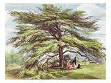 The Lebanon Cedar Tree in the Arboretum, Kew Gardens, Plate 21 Giclee Print by George Ernest Papendiek