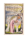 The Fly', Plate 37 from 'Songs of Innocence and of Experience' [Bentley 40] C.1789-94 Giclée-Druck von William Blake