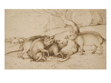 The Boar Family (Pen and Ink on White Paper) Giclee Print by Martin Schongauer