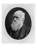 Charles Robert Darwin (B/W Photo) Giclee Print by  Lock and Whitfield