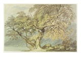 A Great Tree, C.1796 (W/C over Graphite on Paper) Giclee Print by J. M. W. Turner