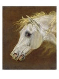 Head of a Grey Arabian Horse (Oil on Canvas on Panel) Giclee Print by Martin Theodore Ward